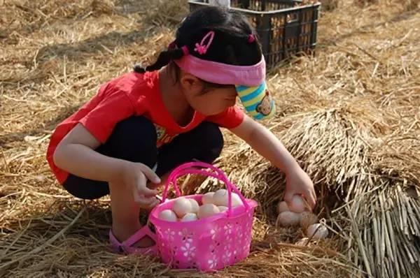 创意手工、树叶贴画、喂小羊、水 活动   活动内容:包粽子、捡鸡蛋