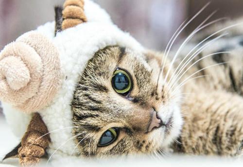 小奶猫喝羊奶粉拉稀图片