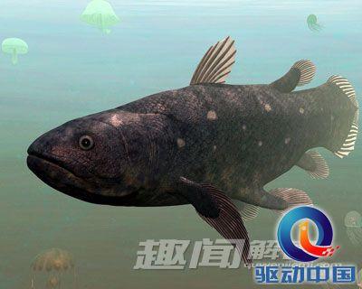 十大远古灭绝动物3,腔棘鱼
