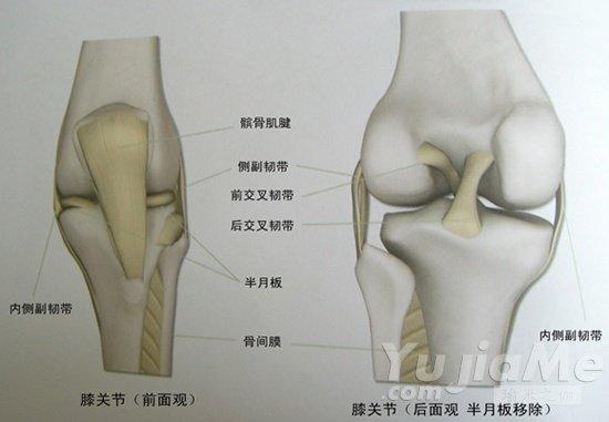 瑜伽如何缓解膝关节疼痛