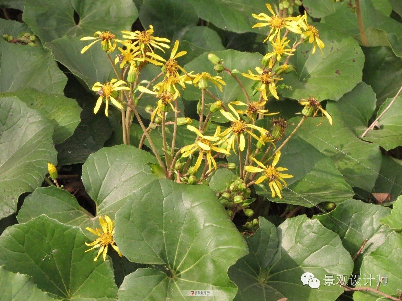 常见室内盆栽植物