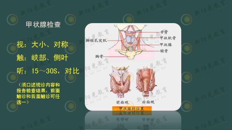 (一)甲状腺的检查
