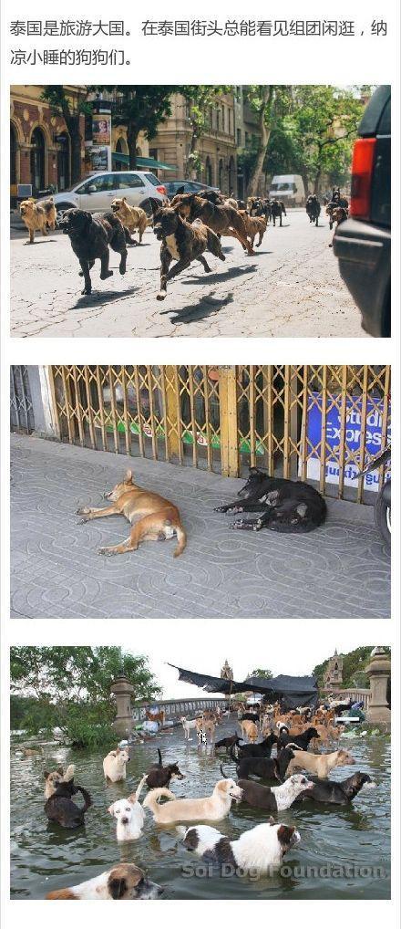 每日一蠢萌:单身狗学着点,想搭讪还是要靠汪星人-蠢萌说
