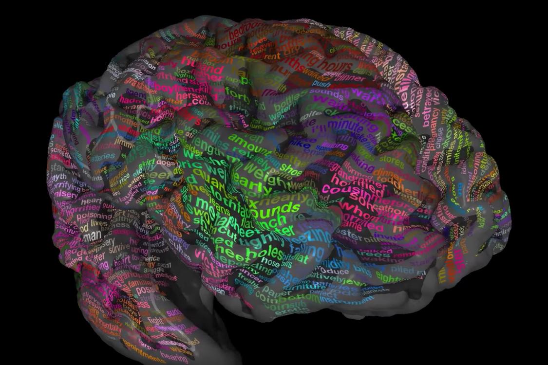 大脑右半球-学术百科-知网空间