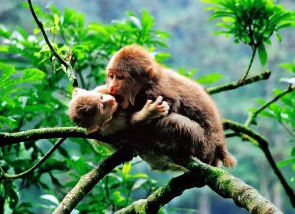 畅游峨眉攻略的秘籍仙山?六月:猴年马月耍峨眉秦皇岛自驾游独门v攻略图片