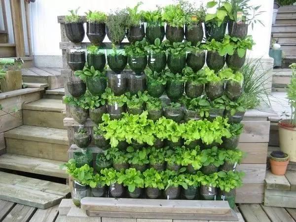 盆栽 墙 植物
