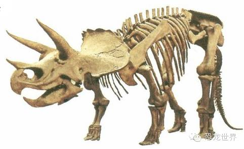 三角龙 犀牛一样的白垩纪食草恐龙