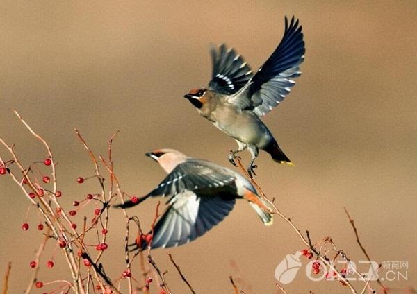 孕妇梦见鸟预示着什么,孕妇梦见鸟好不好,孕妇梦