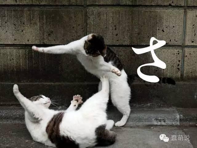 每日一PO宠:那些在东京流浪的可爱喵星人-蠢萌说