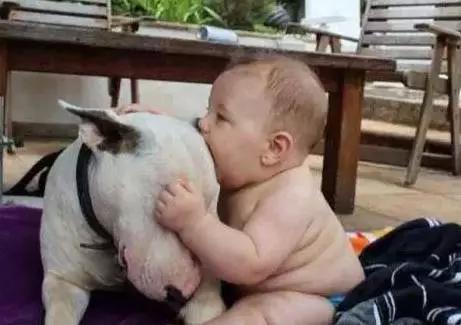 猪的寿命是多少年