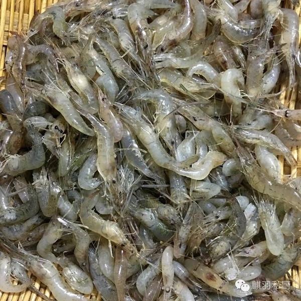 河虾内部结构图