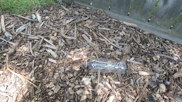 如何使用矿泉水瓶制作一个简易高效的捕鼠器