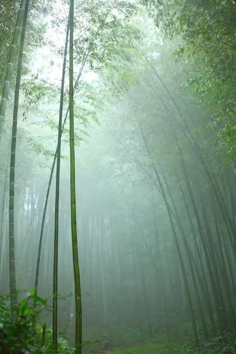 竹林山水荷花风景壁纸