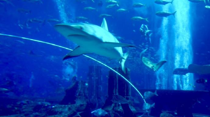 迪拜亚特兰蒂斯,一场惊心动魄的温柔水世界故事