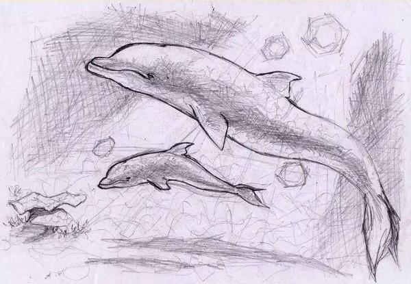蜈支洲 中华白海豚 朋友圈昨天被这几张照片刷爆了