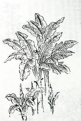 图46B阔叶画法-国画树木的绘画技法图文详解