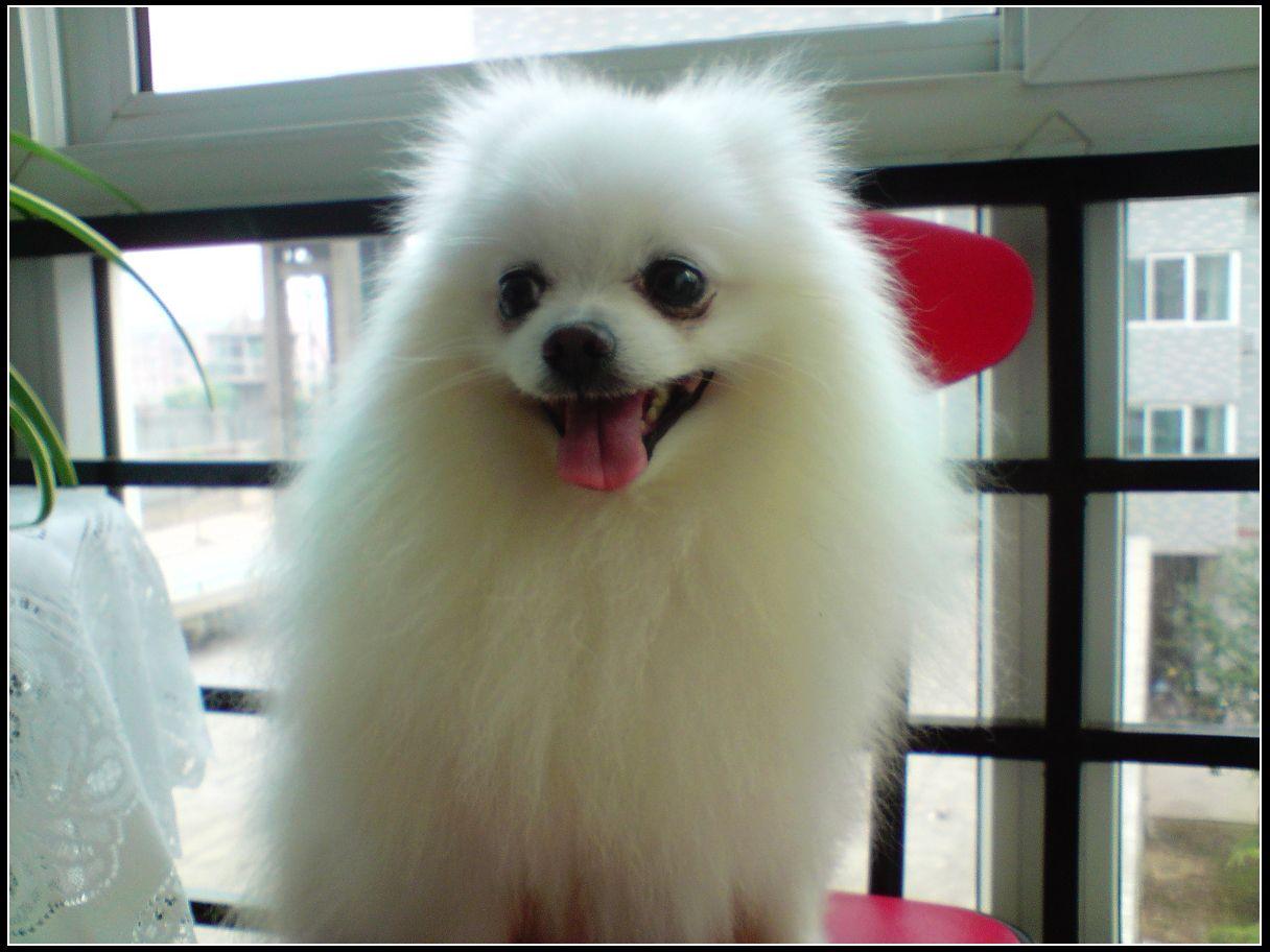 7、粪便   优质狗粮,一般狗狗粪便成型,量少,不粘地面,气味不大!