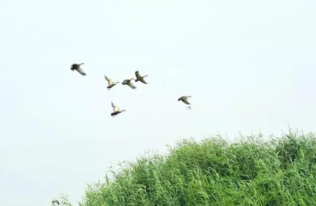 中国古典诗歌中的飞鸟意象:自由的灵魂