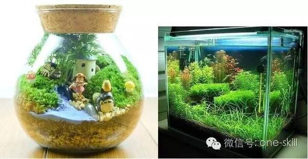景观生态瓶的diy制作过程