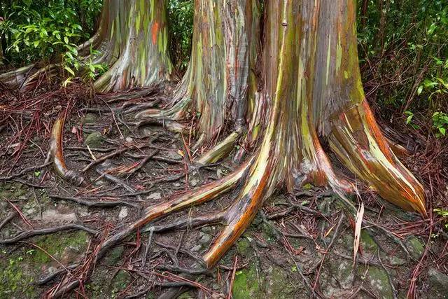 """地球上仅存的8个""""来自星星""""的森林,惊艳!"""