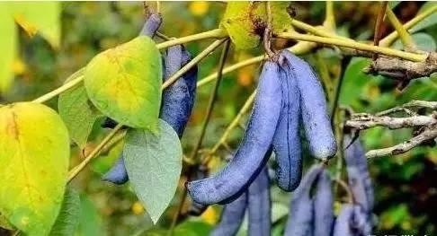 10种最坑人的黑暗水果,样子怪味道也奇葩!