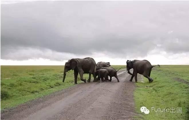 走出东非 肯尼亚、坦桑尼亚游猎记(上)