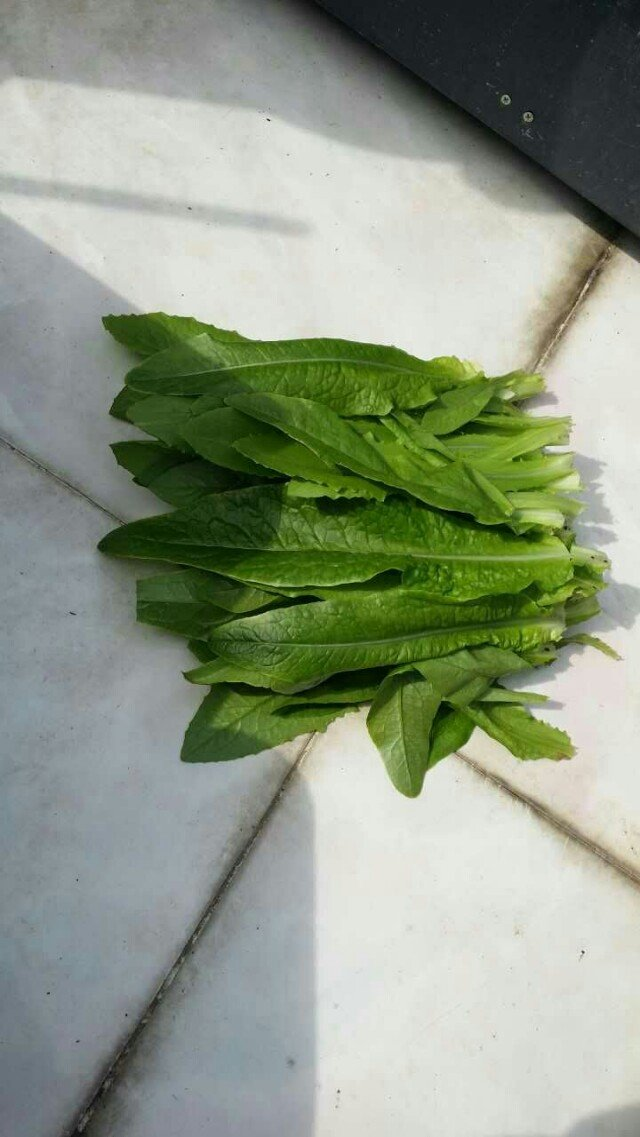 种菜高手是怎样练成的,屋顶种出一片小清新 一图片