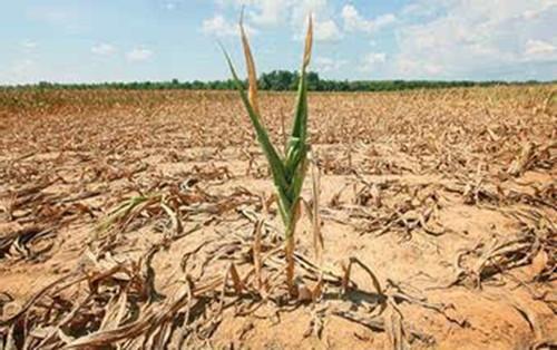 有机肥料在农业生产中的重要性,你知道吗?