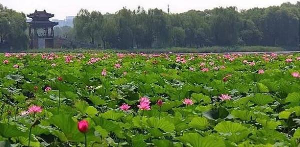 Image result for 丽湖听荷