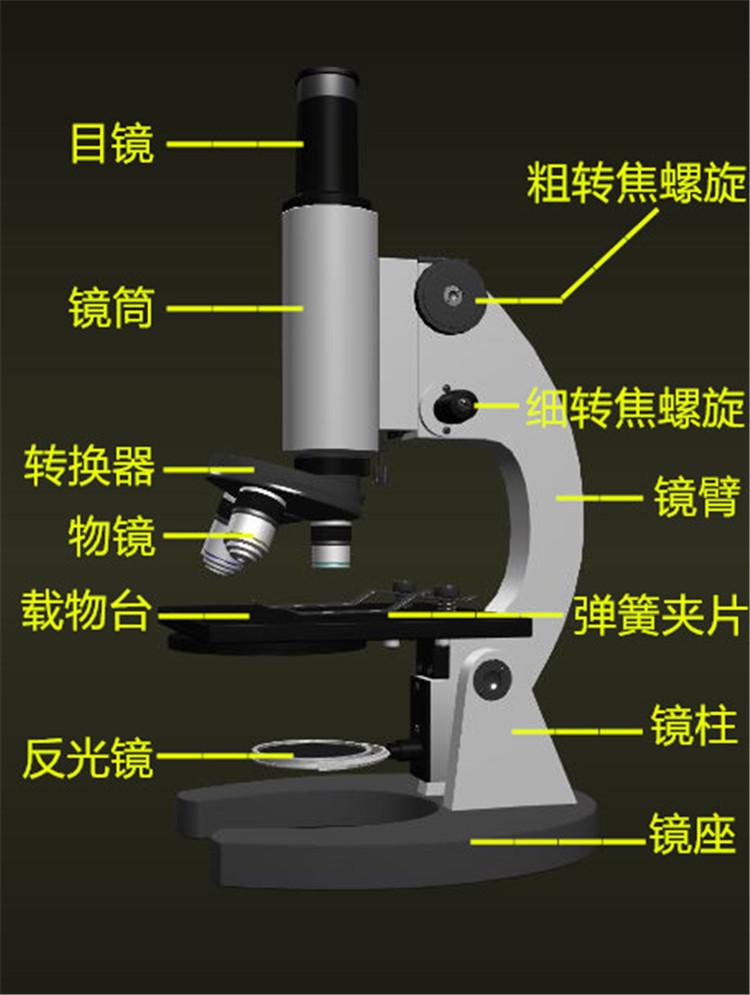 认识显微镜:显微镜的结构图