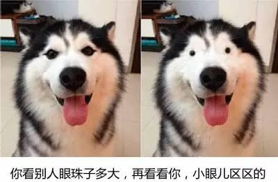 最帅的鹿_什么样的狗适合当警犬 特警小哥 哈士奇的亲戚一概不要