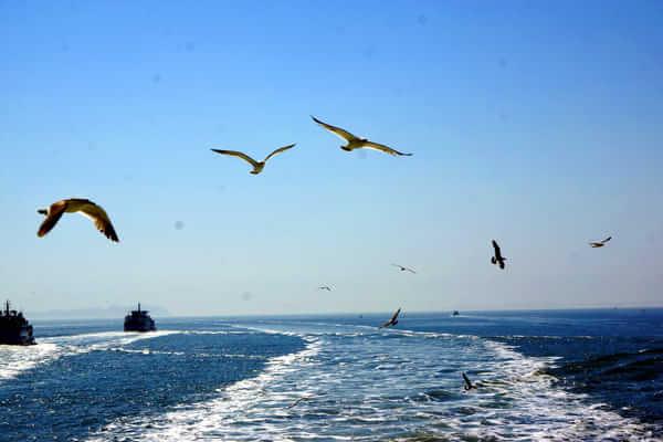 海 嗨 海岛文化节 华姐邀你当渔民
