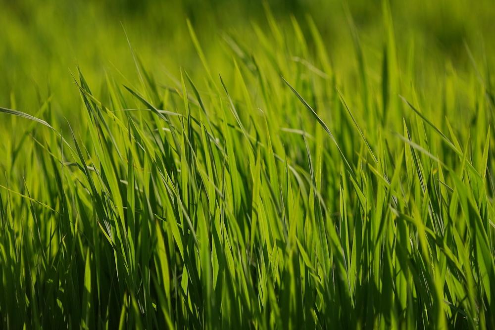 腾冲湿地:看得见的草海 看不懂的门票