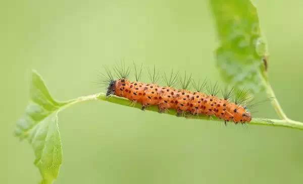 玩户外,哪些虫子的伤害最可怕