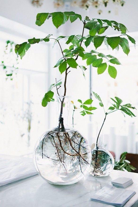 小清新绿植手绘风图片