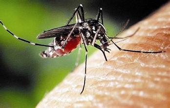 ...家李教授苦心钻研30余年,成功培育出了抗寒蚊子。_手机网易网