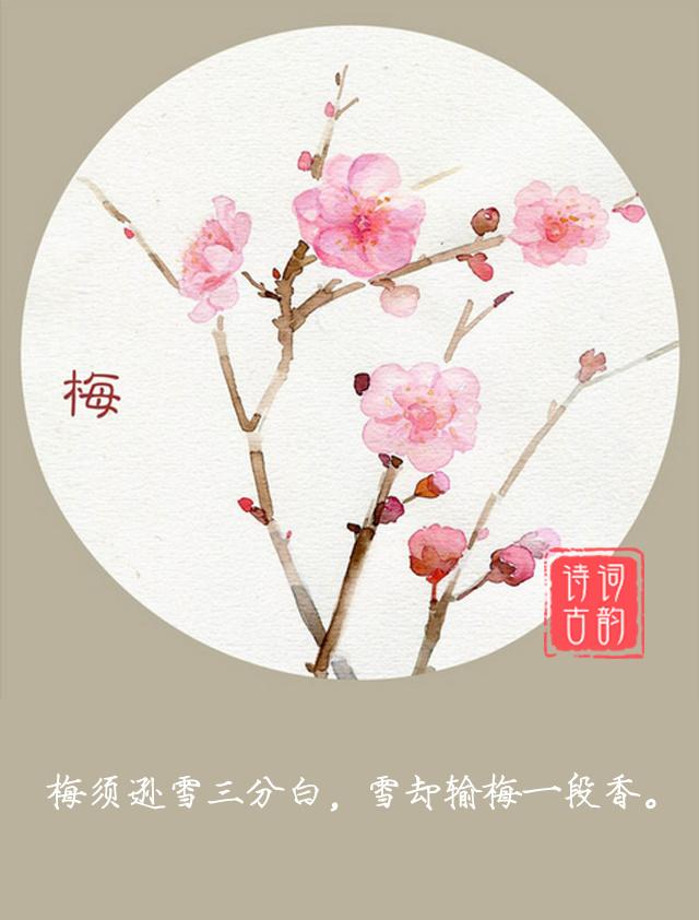 古风梅花手绘图片
