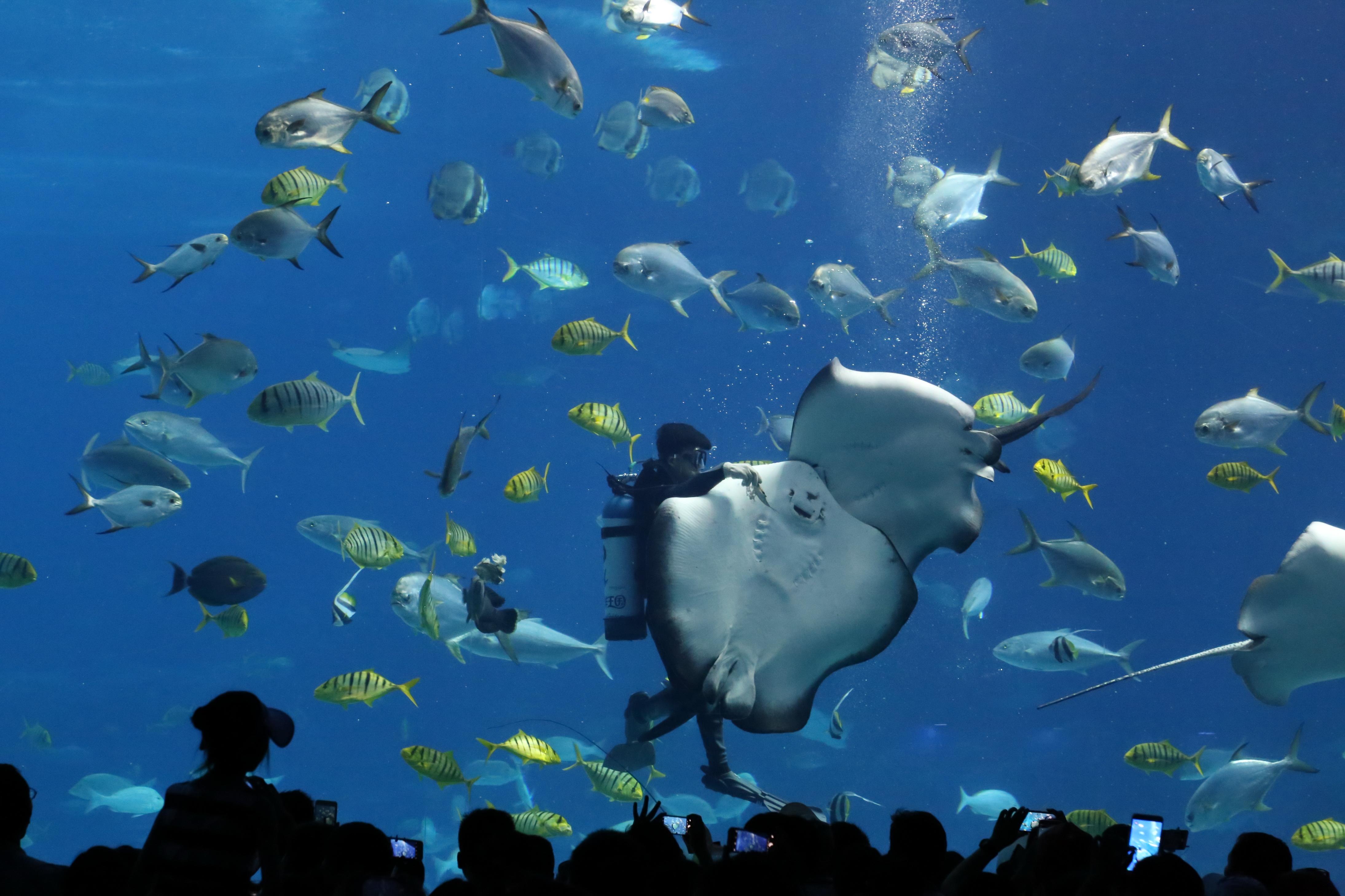 壁纸 海底 海底世界 海洋馆
