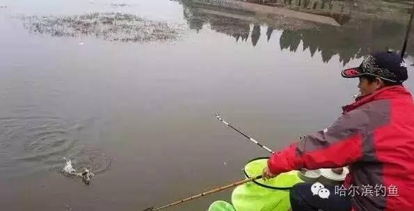 水清人美, 鱼不大, 山里妹子钓鱼不用漂