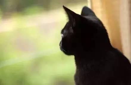 萌宠丨曾经有一只叫荷兮的猫