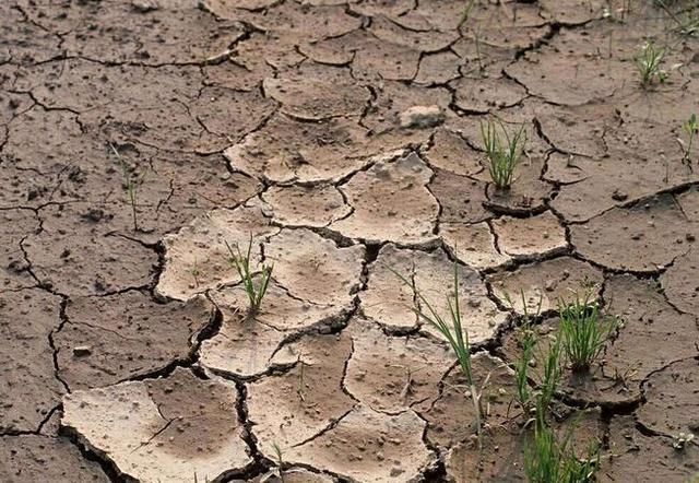 土壤和土壤学报哪个好_土壤的英文怎么读_土壤学报英文