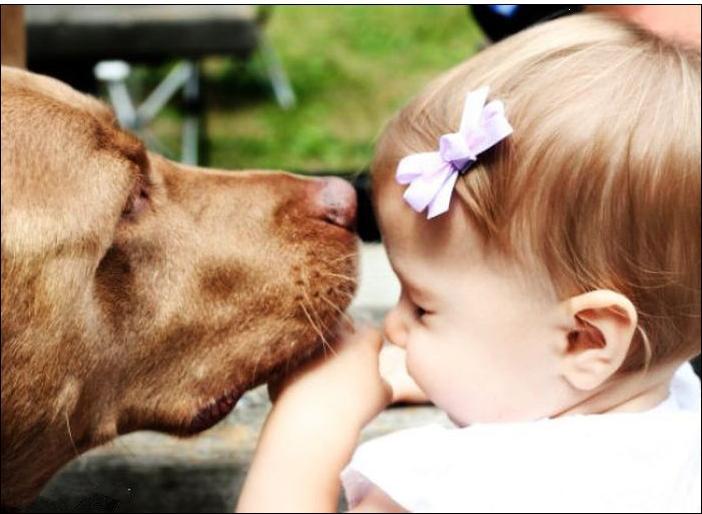 为什么歪果仁放心把宠物和孩子一起养呢?