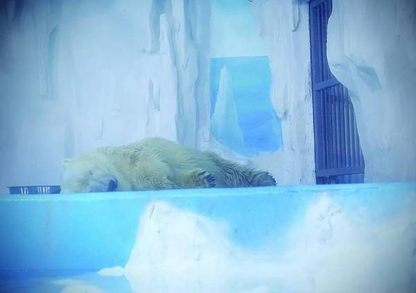 贵阳北极熊水站