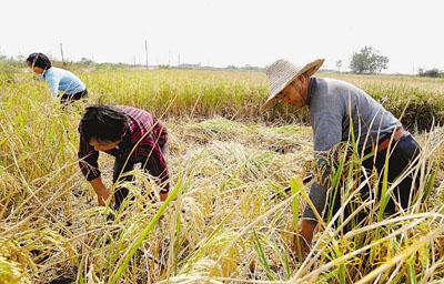 为何种田农民少了,打工农民缺多了?