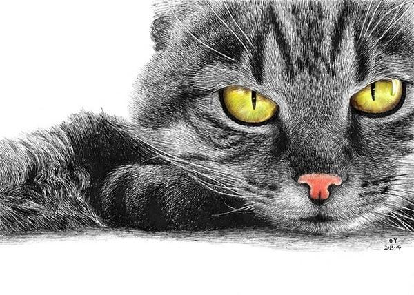 高清钢笔画猫