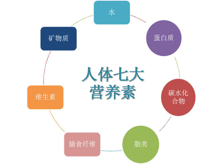 营养组织手绘图