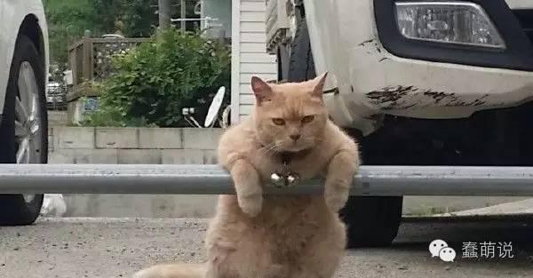 每日一蠢萌:咦?好像有母猫在召唤我诶?-蠢萌说
