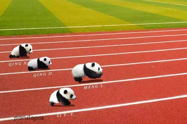 奥运会来啦!早睡早起,天天运动!图片