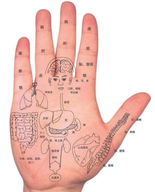 详细的手掌穴位图解大全 小手掌大经络