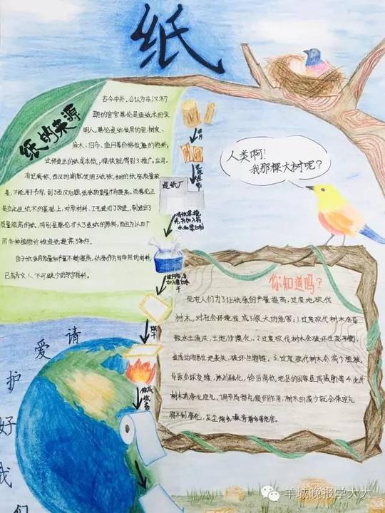 【手抄报】c,d组作品精彩呈现,探索纸张的神秘世界!